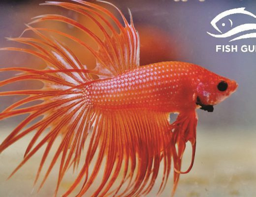 Simple Guidance For You In Betta Fish Tank Setup